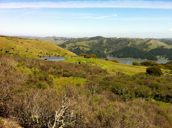 Along Nimitz Way, with views of the cows and San Pablo Reservoir.