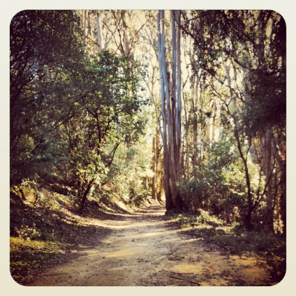 Ah, I love trail running!