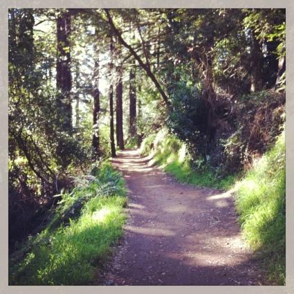 Peaceful trails