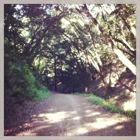 Canyon Trail at Redwood Regional -- one of my favorite parts of today's run.