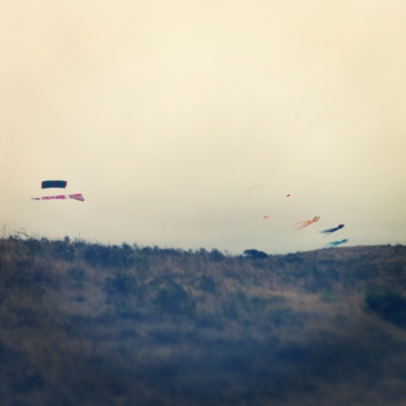 """Let's go fly a kite..."" The Berkeley Kite Festival was happening in the middle of my run today!"