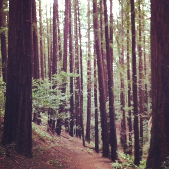 The namesake redwoods of Redwood Regional. The trails are challenging, but at least the scenery is totally worth it.