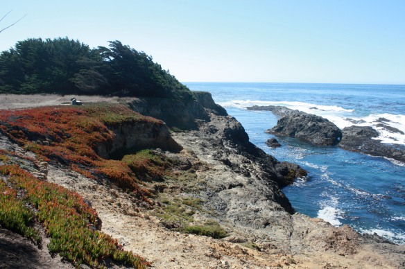Mendocino Headlands.