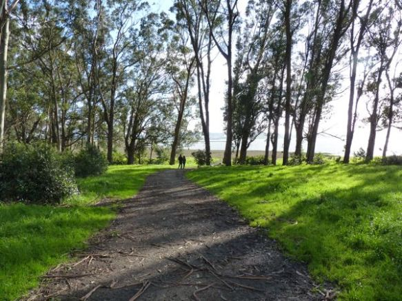 Eucalyptus trees everywhere! (source)