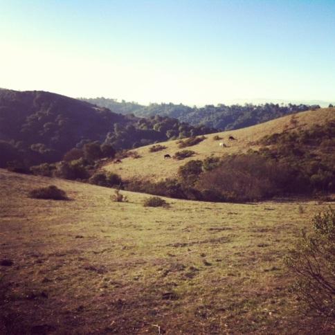 Beautiful hills of Tilden Park