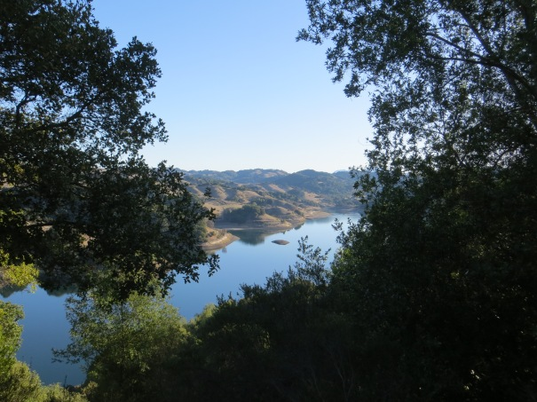 Peeking through the trees for a glimpse of Briones Reservoir (photo credit: Cathryn)