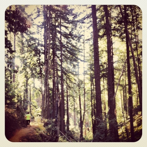 Hiking through the Redwoods.