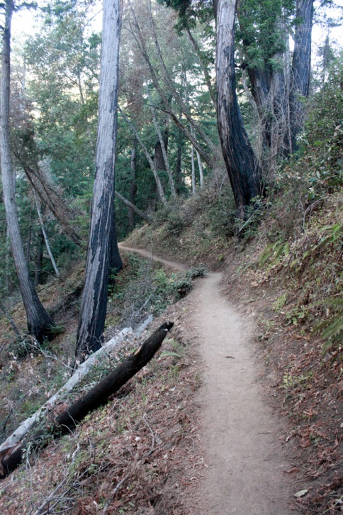 Really thought about running this part of the trail...
