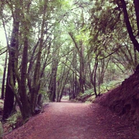 Ah, the serene Stream Trail at Redwood Regional Park.