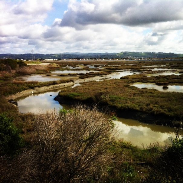 Bay Trail marsh - near San Leandro Marina.