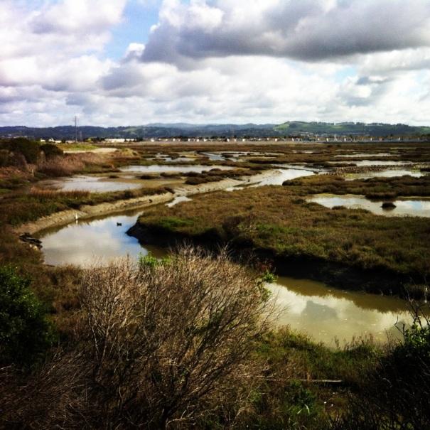 Bay Trail marsh - near San Leandro Marina.