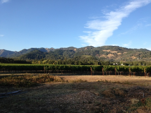 The one photo I took of the vineyards and mountains (Exchange 35).