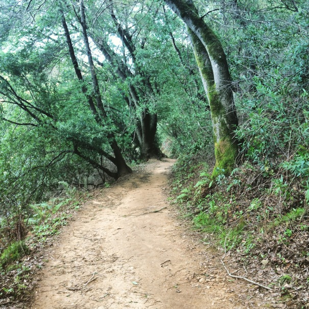 Love these trails at Lake Chabot