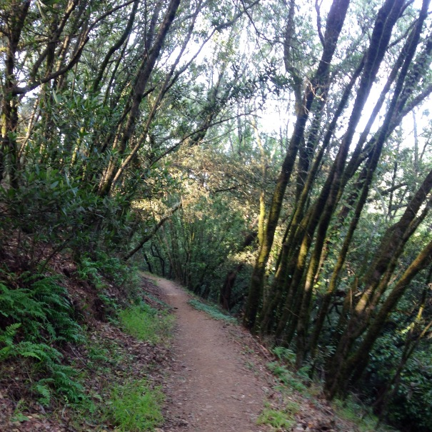 Another week, another photo of beautiful East Bay trails...