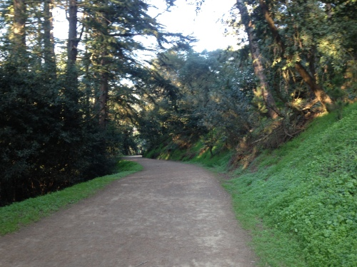 One of the trails I've been running on.  Almost 1000 feet of climbing in 3 miles - a great workout!