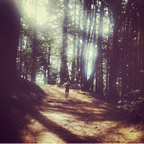 Frolicking in the Redwoods. (Photo credit: JT)
