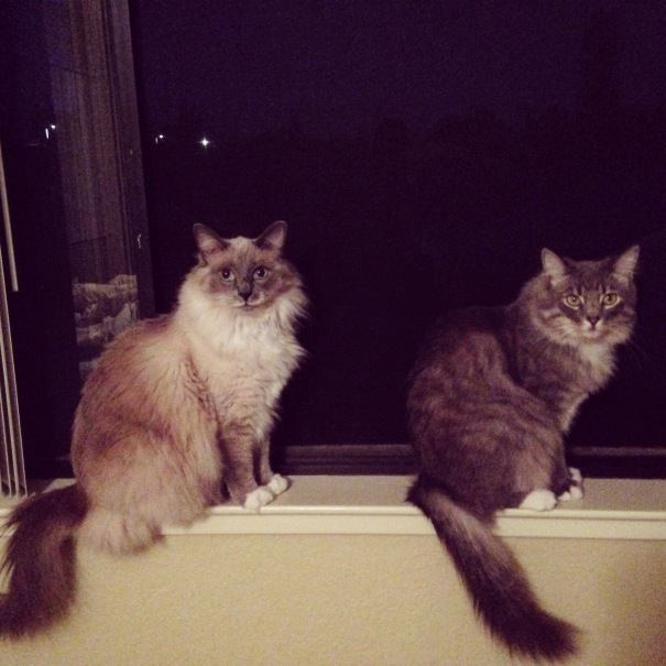 Random photo of my cats, because CATS. #allthefurrr